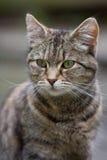 kotów potomstwa Zdjęcie Stock