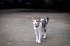 Kotów spacerów outside dom Obrazy Royalty Free