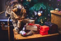 Kotów spacerów Piękny Bożenarodzeniowy tło z nowego roku daccor, prezentami, filiżanką i starymi pudełkami drewniany tło w domu,  Fotografia Stock