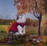 Kotów spacery na krawędzi lasu blisko wioski jesieni dnia Obraz Stock