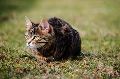 Kotów spacery w świeżym powietrzu Fotografia Royalty Free