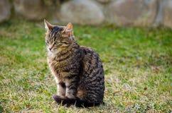 Kotów spacery w świeżym powietrzu Obraz Royalty Free