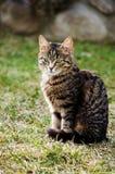 Kotów spacery w świeżym powietrzu Zdjęcia Royalty Free