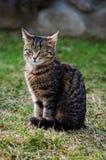 Kotów spacery w świeżym powietrzu Zdjęcia Stock
