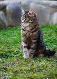 Kotów spacery w świeżym powietrzu Obrazy Stock