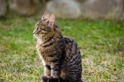 Kotów spacery w świeżym powietrzu Fotografia Stock