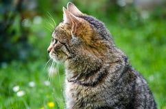 Kotów spacery w świeżym powietrzu Obraz Stock