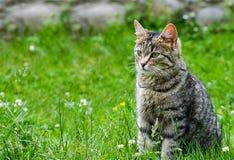 Kotów spacery w świeżym powietrzu Zdjęcie Stock