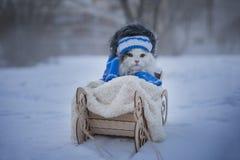 Kotów spacery w pełnozamachowym mroźnym dniu Fotografia Stock