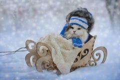 Kotów spacery w pełnozamachowym mroźnym dniu Obraz Stock