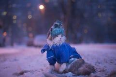 Kotów spacery w zimie Zdjęcia Royalty Free