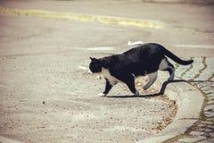 Kotów spacery wzdłuż ulicy Zdjęcia Royalty Free