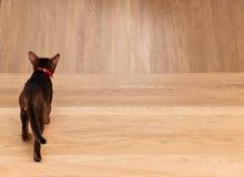 Kotów spacery zdala od problemów Obrazy Royalty Free