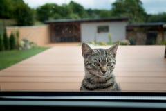 kotów spojrzenia w dom przez okno Obrazy Stock