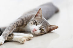 Kotów spojrzenia w kamerę i dosypianie Zdjęcia Stock