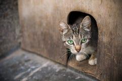 Kotów spojrzenia z lochu Zdjęcia Royalty Free