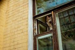 Kotów spojrzenia z okno Obrazy Royalty Free