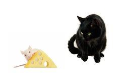 kotów szczury Obraz Royalty Free