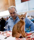 kotów wystawy zawody międzynarodowe Fotografia Royalty Free