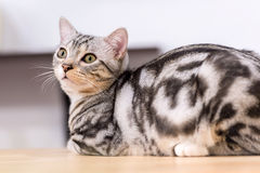 Kotów zdrowie Zdjęcia Royalty Free