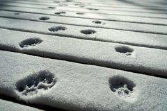 Kot łapy druki w śniegu zdjęcie stock