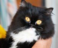 kot ładny Obrazy Stock