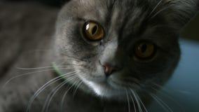 kot łapa dotyka obiektyw zbiory wideo