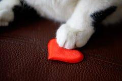 Kot łapa trzyma serce St Walentynka dzień Gratulacje na walentynka dniu obraz royalty free