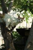 Kot łapiący w drzewie fotografia stock