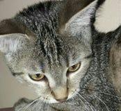 Kot śliczny obrazy royalty free