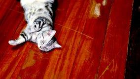 kot śmieszne zdjęcia royalty free