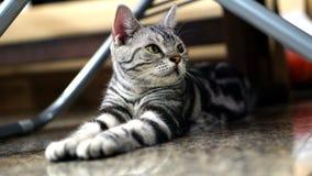 kot śmieszne obraz stock