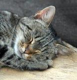 kot śpi zdjęcia royalty free