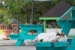 Kot śpi na ławce obrazy stock