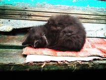 Kot śpi na ławce Fotografia Stock