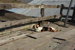 Kot śpi na drewnianej ścianie Obrazy Royalty Free