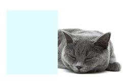Kot śpi za sztandarem na białym tle Obrazy Stock