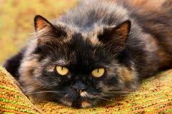 Kot. Obrazy Royalty Free