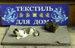 Kot… Zdjęcia Royalty Free