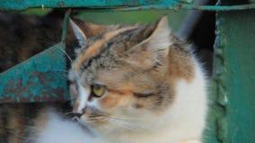 Kot zdjęcie wideo