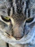 Kot Zdjęcie Stock