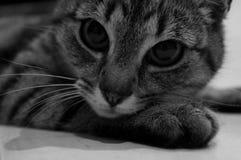 kot Zdjęcie Royalty Free
