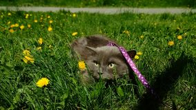 Kot Ładny Zdjęcie Stock