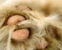 Kot łapa Zdjęcie Stock