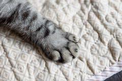 Kot łapa Zdjęcia Stock