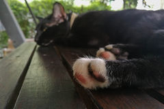 Kot łapy spali Fotografia Stock