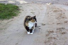 kot barwił trzy Zdjęcie Stock