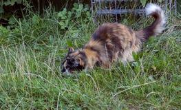 kot barwił trzy Zdjęcia Royalty Free