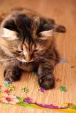 Kot bawić się łamigłówkę na podłoga Obraz Stock