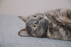 Kot, bawić się, jedzie na stronie Fotografia Stock